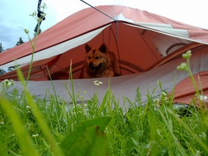 Once, a local dog jumped into one of the tents we stayed in...